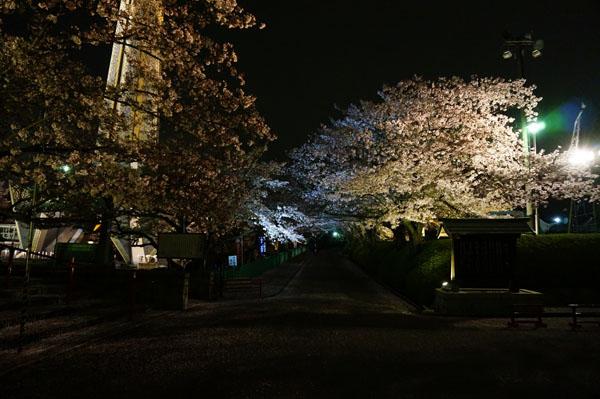 弁天桜のトンネル白DSC00382
