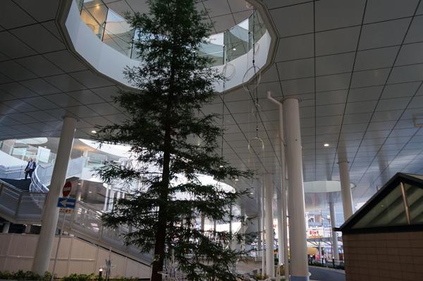 JR茨木駅東口の木でひかりの回廊準備