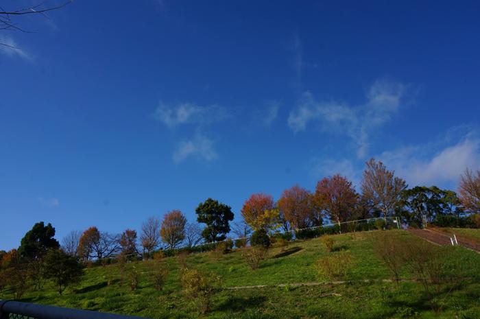 山手台公園の崖