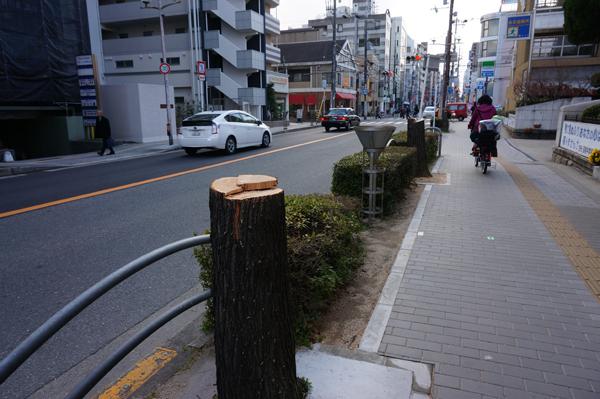 0301養精中前の街路樹伐採