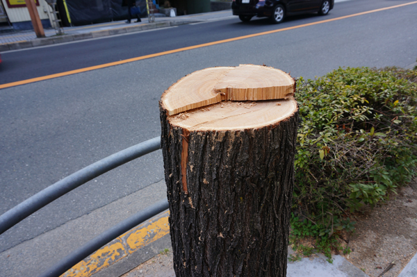0301養精中前の街路樹DSC07767