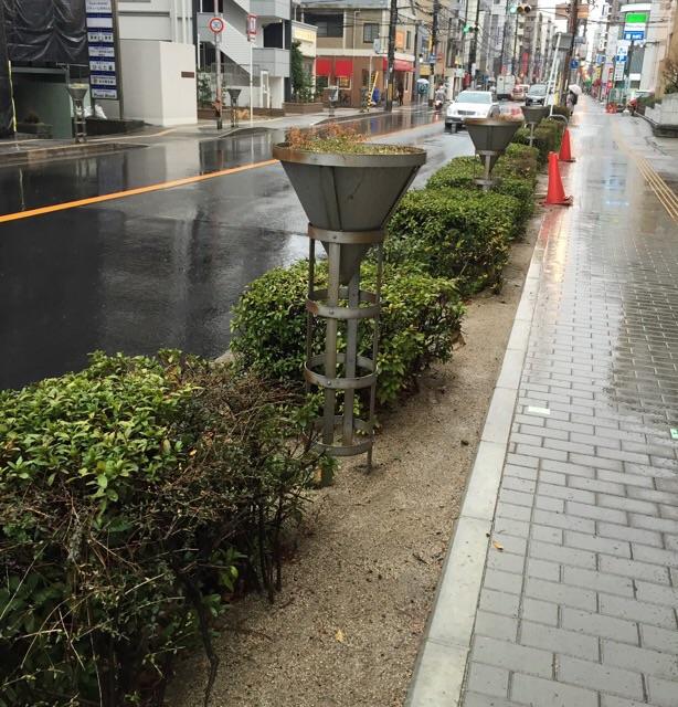 中央通り樹種更新あと