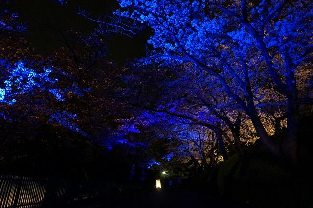 桜のトンネル青