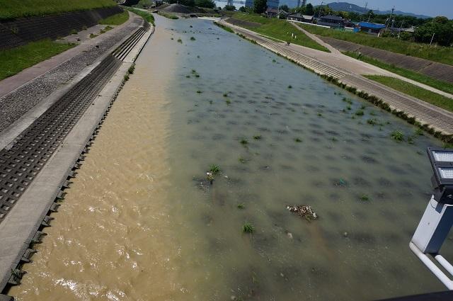 5月18日安威川の水の色が違うところ