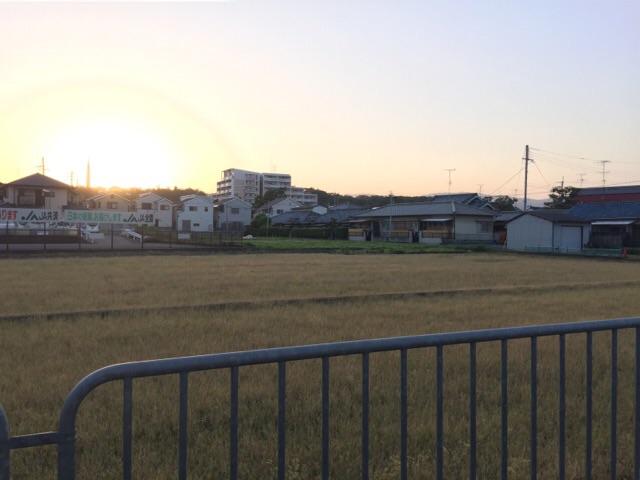 産業道路沿いの田んぼ風景2