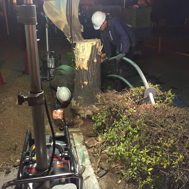 3月6日街路樹の植え替え