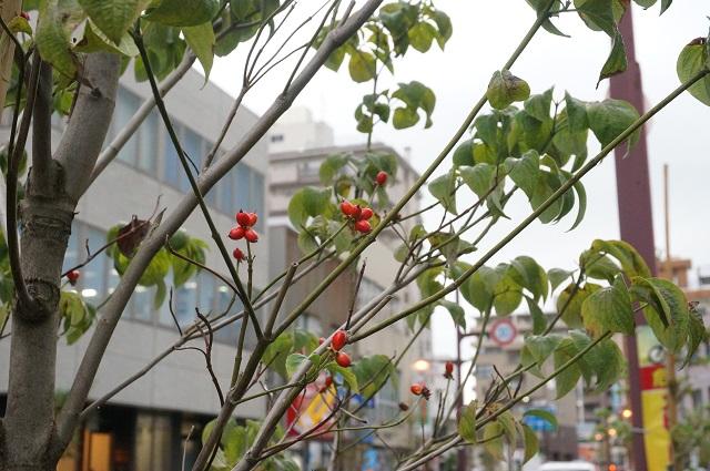 春日丘高校前道路の植樹