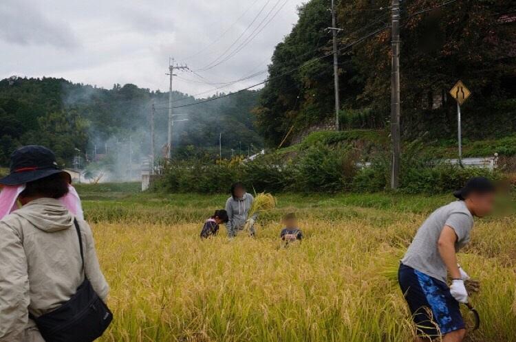 日本酒プロジェクト稲刈りの親子