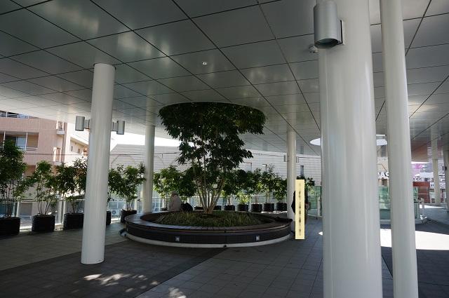 JR茨木東口ロータリーの植木2