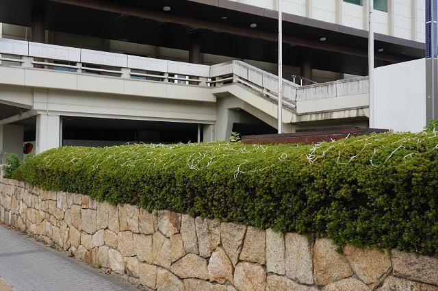 1120光の回廊市民会館前DSC02232