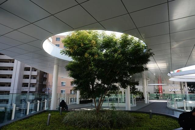 JR茨木東口ロータリーの植木1
