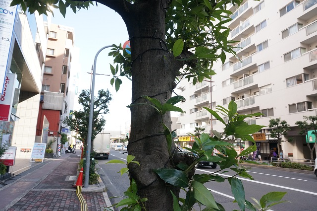 エキスポロード沿いの植樹にイルミネーション