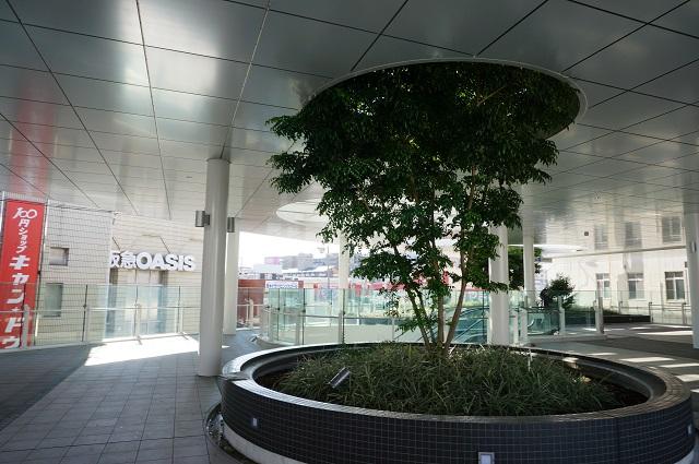 JR茨木東口ロータリー植木4