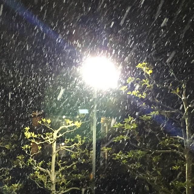 茨木市内2017年初雪IMG_5192