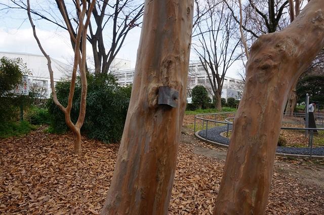 茨木市制施行35周年植樹の幹1DSC04980