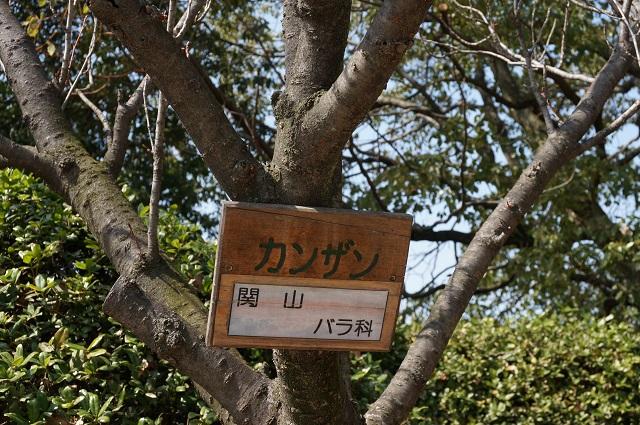 桜かんざんの札