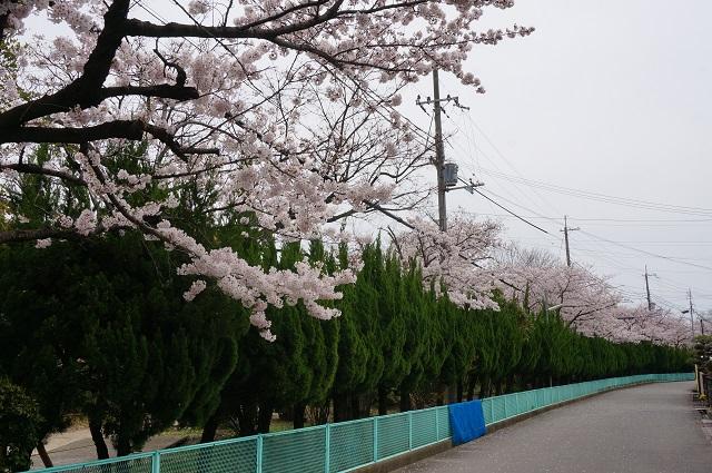 元茨木川緑地道路側から2017DSC05291