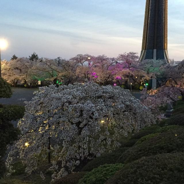 弁天さんの夜桜2017IMG_6214
