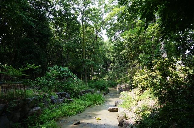 西河原公園の小川を北へDSC06623