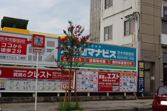 阪急吉野家そばサルスベリの木DSC07742