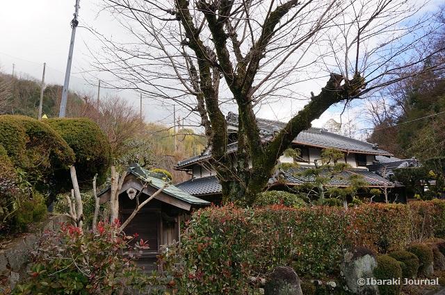 カフェらんのそばの桜DSC00857