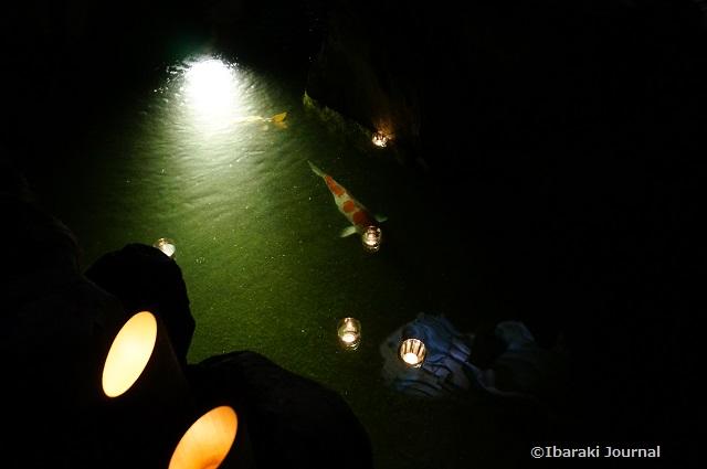総持寺竹灯籠の池の鯉