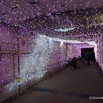 2017光の回廊桜通りへのトンネルDSC00135