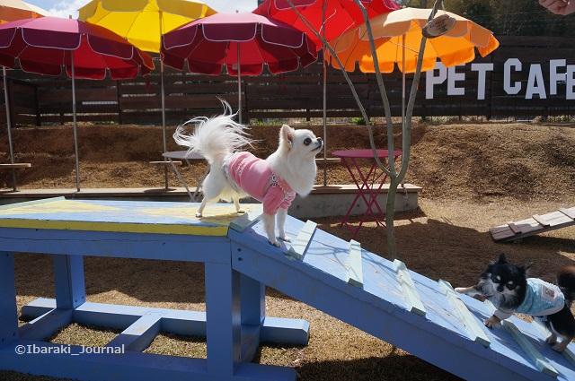 ザファーム小型犬用ペットカフェでDSC02515