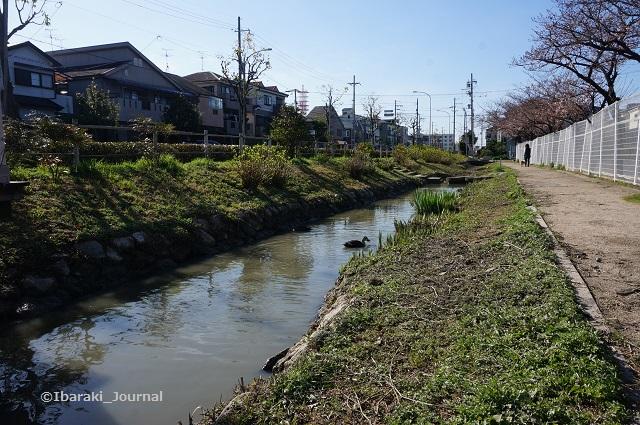 0324桑田公園そば茨木ドライビングスクール横風景DSC02642
