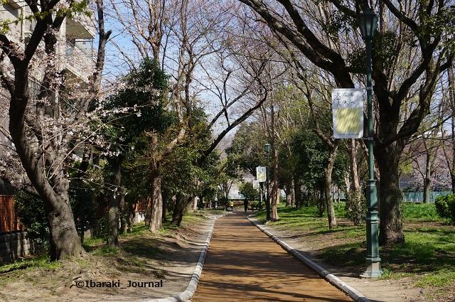 元茨木川緑地さくら通りの道が舗装DSC02698