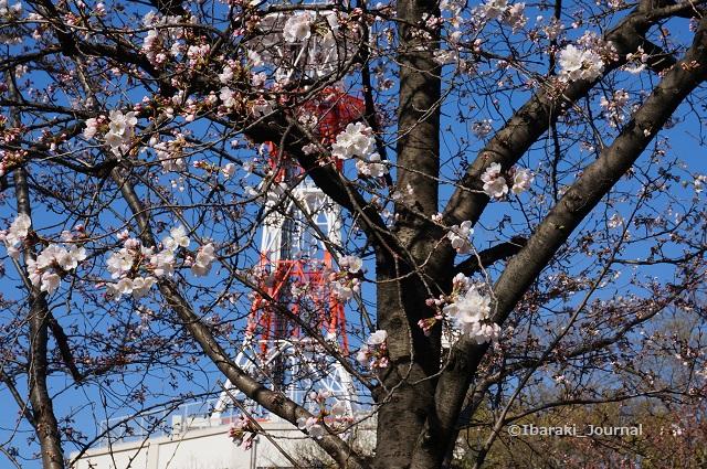 0324茨木消防署そば桜DSC02628