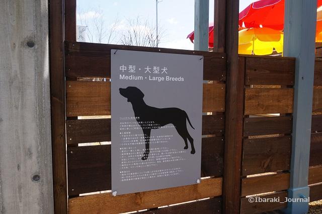 ザファームペットカフェ中型大型犬用DSC02503