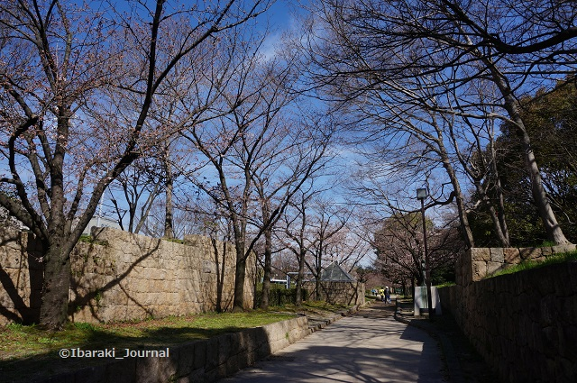 元茨木川緑地川端通りのほうDSC02699