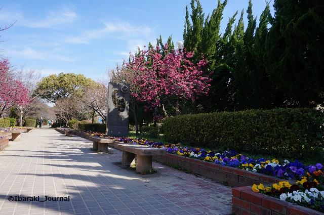 元茨木川緑地さくら通りのほうDSC02680