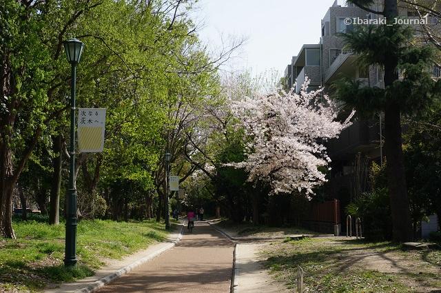 0331桜通り風景1DSC03119