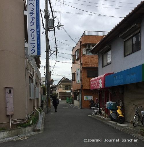 道順ベッチャククリニック前IMG-6874