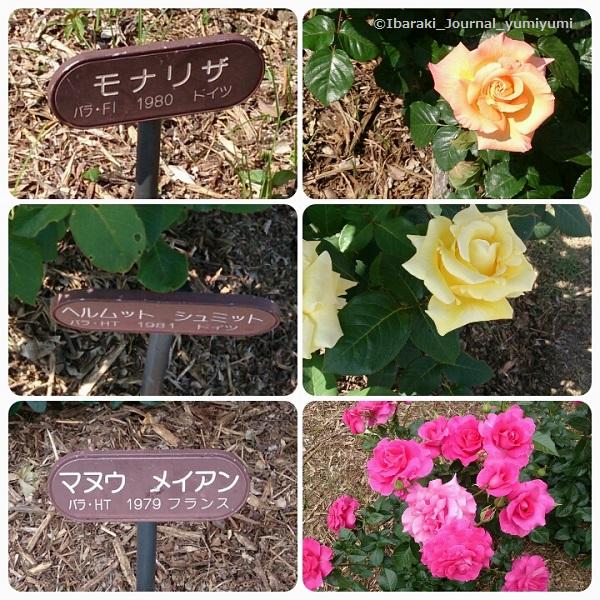 バラ園花の種類120180502_143308