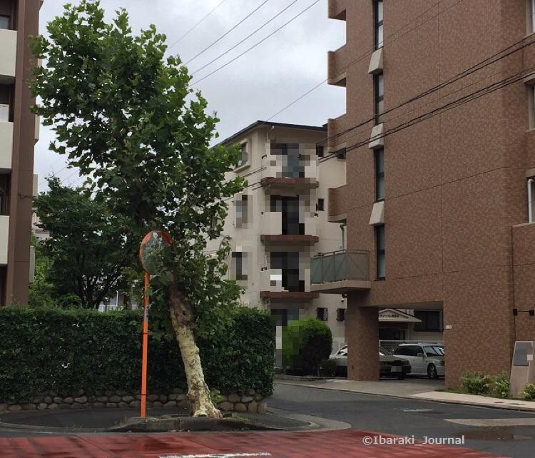 南茨木の木IMG_3428
