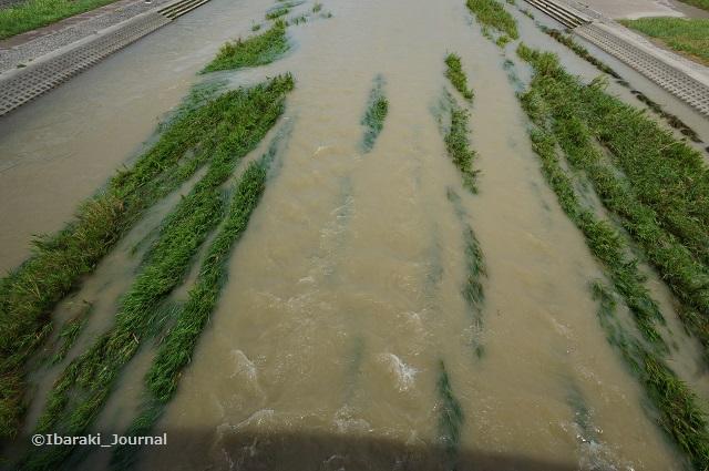 8月24日安威川水の色DSC05934