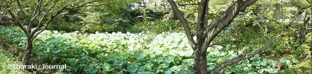 辯天蓮の池パノラマDSC05700