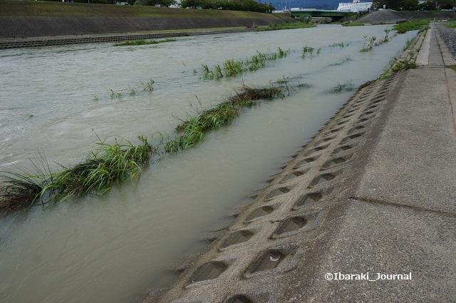 9月8日安威川の東側の土手2DSC06173