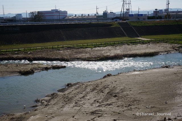 3月あけぼの橋そばの安威川DSC02650