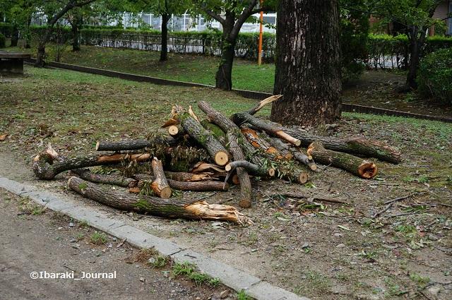 0908元茨木川緑地川端通りで枝を切ったあと1DSC06229