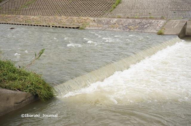 9月8日茨木川のほう2DSC06135