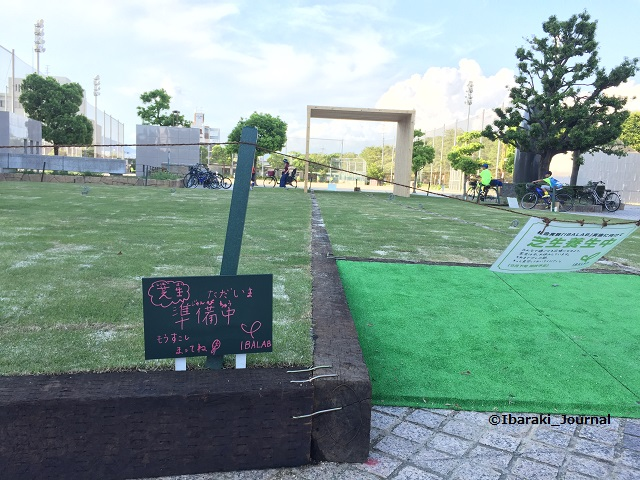 0827芝生広場養生中IMG_4200
