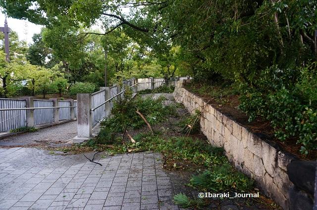 0905茨木神社西側土手のほうDSC06048