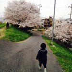 桜の風景hyoue-sann