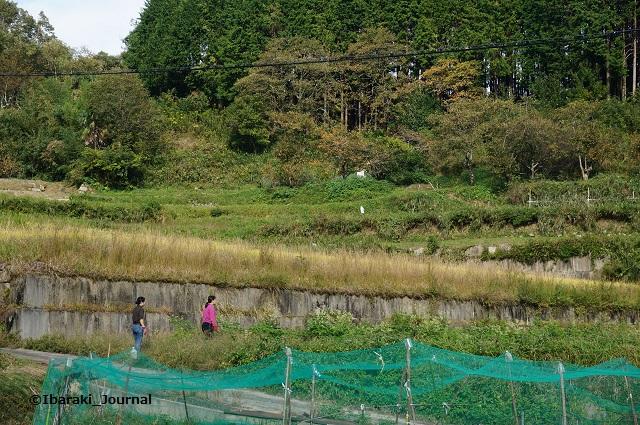 畑で樋口さんと中井さんDSC06947