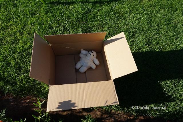 箱におもちゃDSC06600