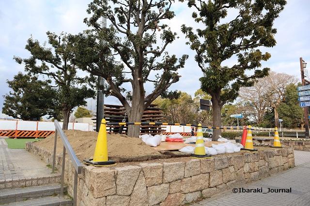 市民会館前人工台地の植木IMG_8238